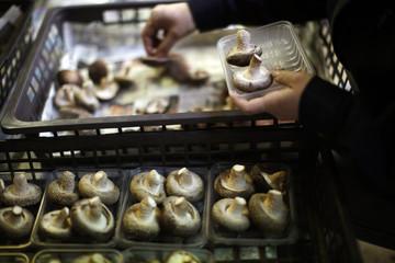 A woman packs shiitake mushrooms at the Anzai family farm near Fukushima, northern Japan