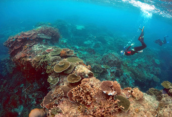 Peter Gash, owner and manager of the Lady Elliot Island Eco Resort, snorkels during an inspection of the reef's condition in an area called the 'Coral Gardens' located at Lady Elliot Island and north-east from the town of Bundaberg in Queensland