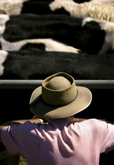 File photo of an Australian farmer looking at a herd of cows during an auction northwest of Sydney