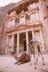 Camels in front of Treasury. Petra, Jordan.