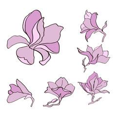 Magnolia flower set outline sketch colored in pink.