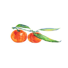 Hand drawn fresh orange mandarin. Painting isolated tropical tangerine set. Watercolor fruit illustration on white background