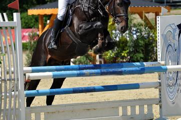 Der Hürdernsprung, das Pferd springt über das Hindernis