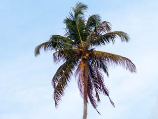 Palm on the sky background