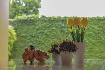 Tulip flowes