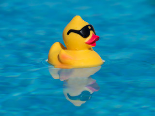 Yellow rubber duck with black sunglasses floating on a beautiful blue swimming pool. The reflection can be seen and under the water.