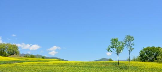 初夏の高原・青空と花の風景