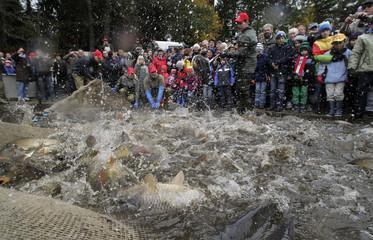The water in a carp pond in Heidenreichstein froths during dry fishing at a pond in Heidenreichstein