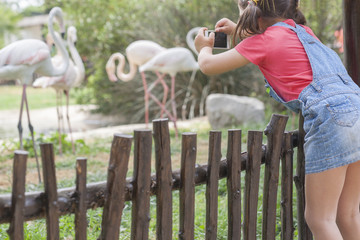 Little girl getting close to the flamingoes enclosure