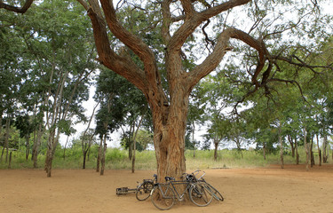 Bicycles are parked under a tree at Muusini primary school, where newly planted trees stand in the background in Kibwezi
