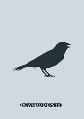 Canary bird icon, Vector