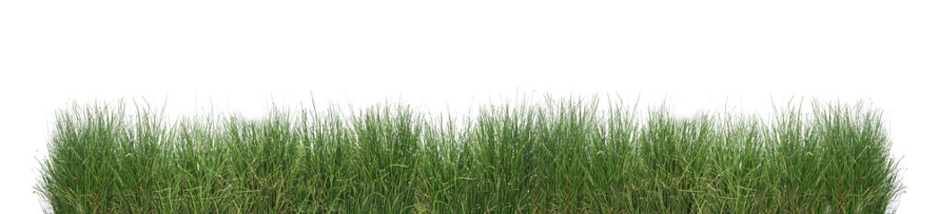 Papiers peints Herbe Green grass isolated.