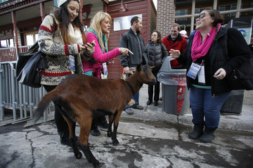 Sundance the goat is photographed by people while he is walked by his owner Walter Yates along Main Street on the opening day of the Sundance Film Festival in Park City, Utah