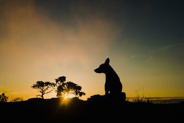 Dog silhouette at sunrise in Brazil
