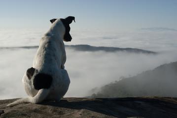 Dog looks the fog at sunrise in Brazil