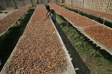 A labourer dries betel nuts at a cottage industry in Choto Shalkumar village