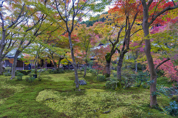 Japanese red maple tree during autumn in garden at Enkoji temple in Kyoto, Japan