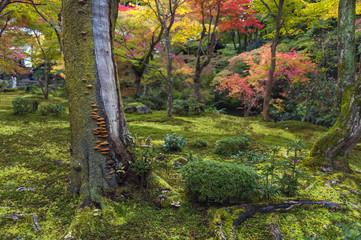 Mushrooms grow on tree bark during autumn in Japanese garden in Kyoto