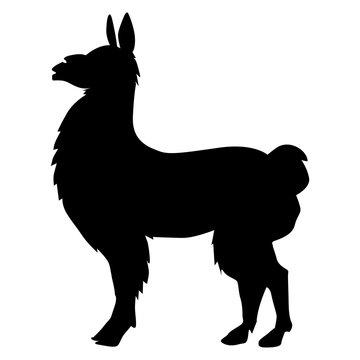 lama animal of South America