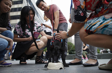 """Office workers play with dogs during a lunchtime """"Save Our Street Dogs"""" adoption drive in the central business district of Singapore"""