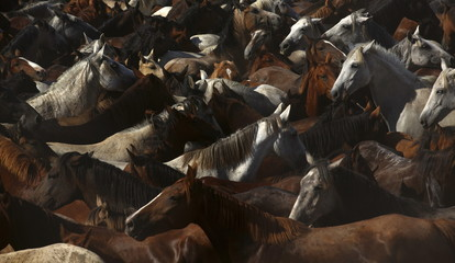 """Wild mares gather in front of the shrine of El Rocio during the """"Saca de yeguas"""" event at El Rocio, in Almonte, southern Spain"""