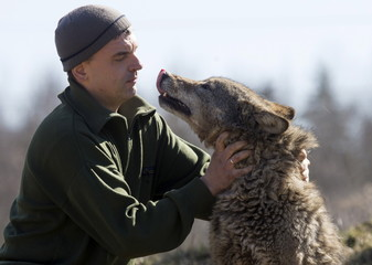Shamovich plays with tamed wolf at tourist homestead in village of Sosnovy Bor