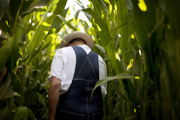Man walking through a corn field