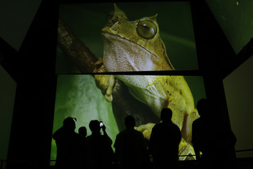 Visitors look at screens showing a frog, part of the biodiversity in Panama, at one of the permanent exhibitions at the Biomuseo in Panama City