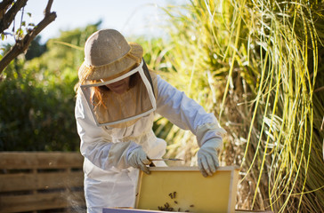 Mid adult woman in bee keeper's clothing lifting up part of a bee hive.