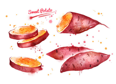 Watercolor illustration of sweet potato