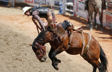 A participant gets bucked off a horse in the novice saddle bronc event during the 101st Calgary Stampede rodeo in Calgary