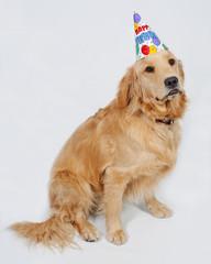 Golden Retriever Birthday Puppy