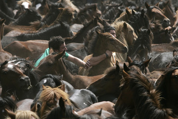 "Men catch a horse during the ""Rapa Das Bestas"" event in Mougas, northwestern Spain"