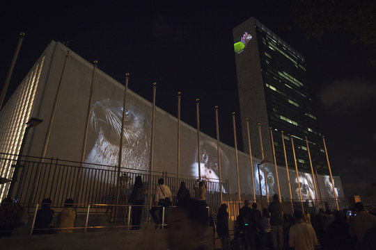 Images of animals are projected onto the U.N. building ahead of the climate change talks that will take place on the sidelines of the U.N. General Assembly, in New York