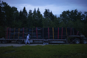 Beekeeper David Hackenberg secures bee hives stacked upon the back of a truck as he prepares to transfer the bees to another crop after they completed pollinating a blueberry field near Jonesboro, Maine