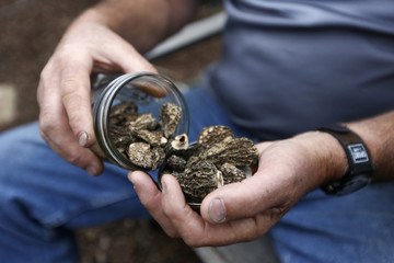 San Francisco Mycological Society President Curt Haney displays some dried morel mushrooms at his home in San Francisco