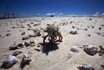 A hermit crab walks across sands exposed at low-tide on Bikeman Islet, located off South Tarawa in the central Pacific island nation of Kiribati