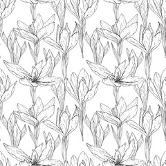 Seamless season pattern with  contour black and white crocuses. Endless texture for floral summer design with flowers