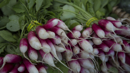 Isolated Close Up Right Angle View of Fresh Red and White Radishes Green Tops, Local Farmers Market,  Background Backdrop Use with Text Copy Space Overlay (HDR Image) - Eugene, Oregon, USA