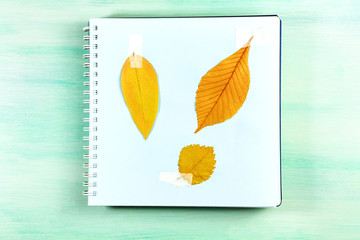 Photo of herbarium on teal background with copyspace