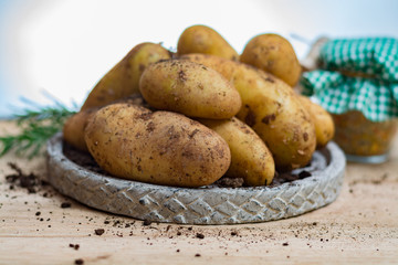 New harvest - young raw organic potatoes uncooked