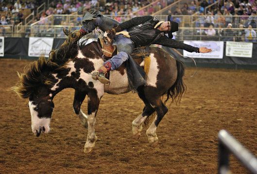Braussard of Estherwood rides Poison Ivy during the 128th Silver Spurs Rodeo held at Osceola Heritage Park in Kissimmee
