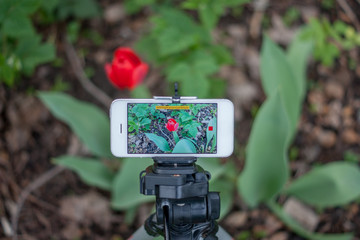 Phone on a tripod shoots video outdoors