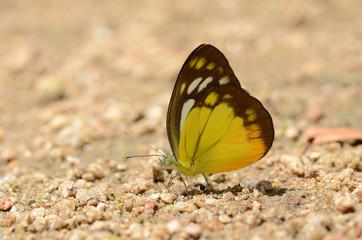 Butterflies on the floor.