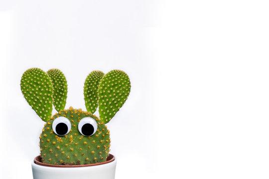 Bunny Ohren Kaktus