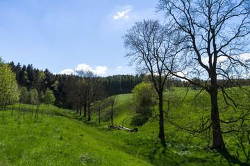 Landschaft bei Naundorf (Sächsische Schweiz) im Frühling