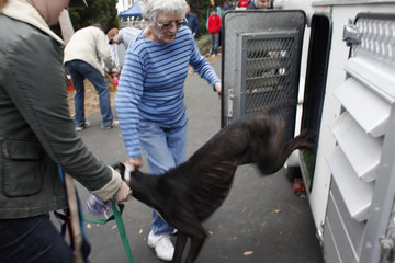 Fast Friends founder Joyce McRorie helps Bowtie Man the greyhound out of the Hound Hauler in Los Angeles