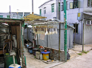 In the fishing village of Tai O (Hong Kong), fish are hanging on a scaffolding between small buildings