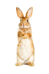 rabbit is standing on its hind legs