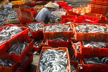 A woman packages freshly caught fish at a port in the city of Dongfang on the western side of China's island province of Hainan